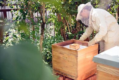Bienenwanderung – Imker bei der Arbeit