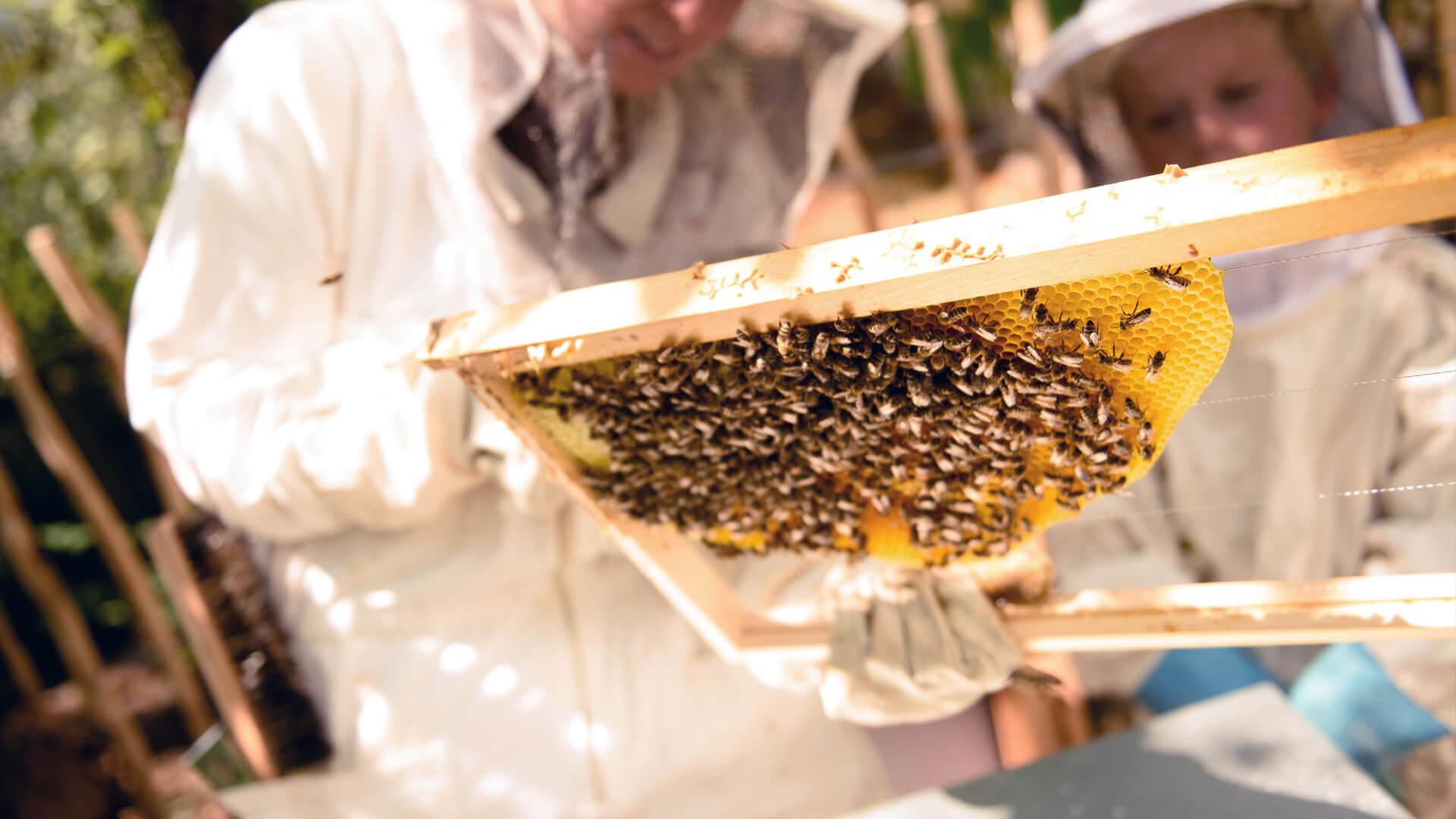Biohotel Bavaria Bienenwandern in Garmisch-Partenkirchen